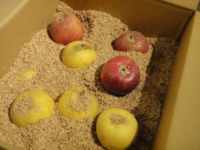 長野・安曇野の「おぐらやま農場」さんのりんご