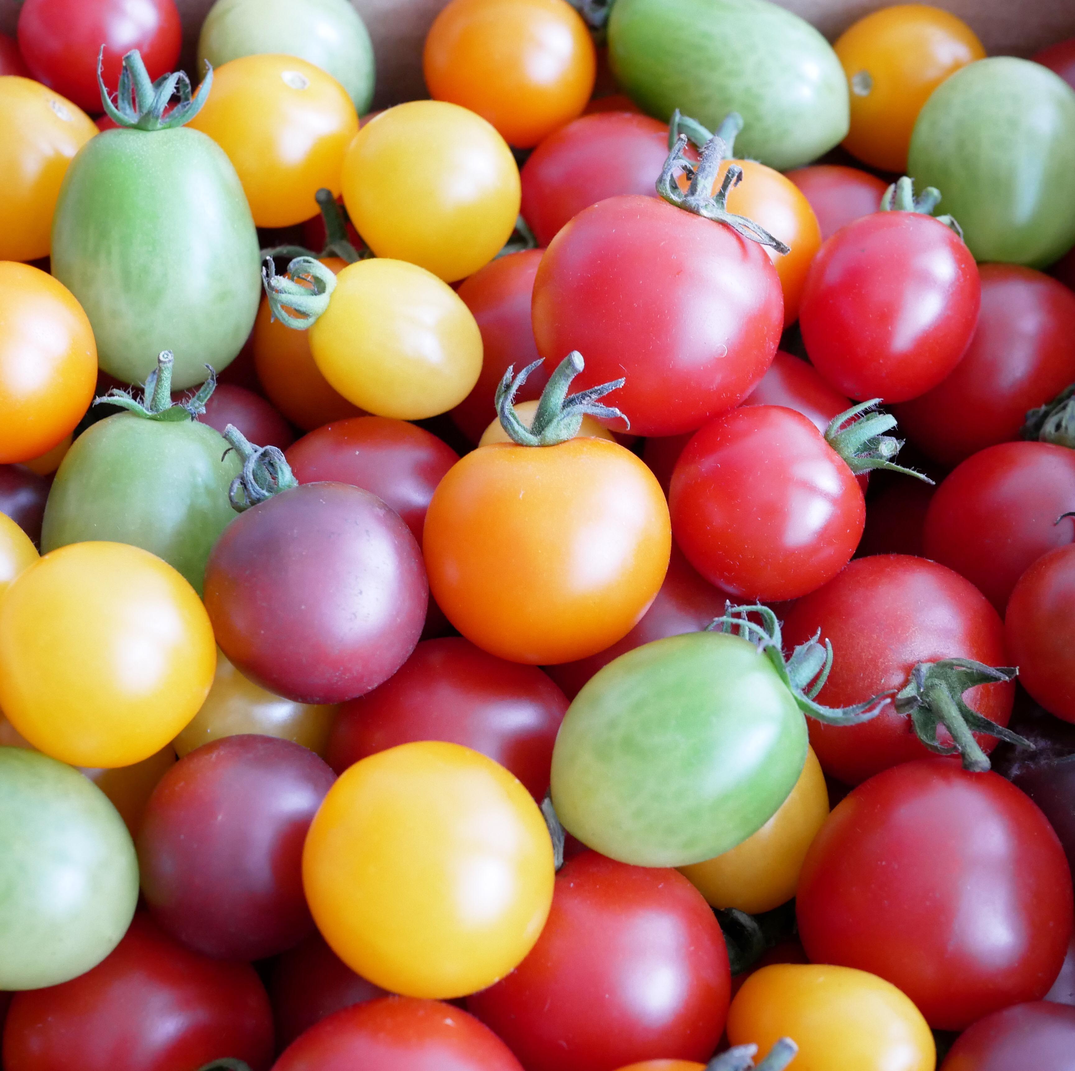 ハラハチファームさんのミニトマト