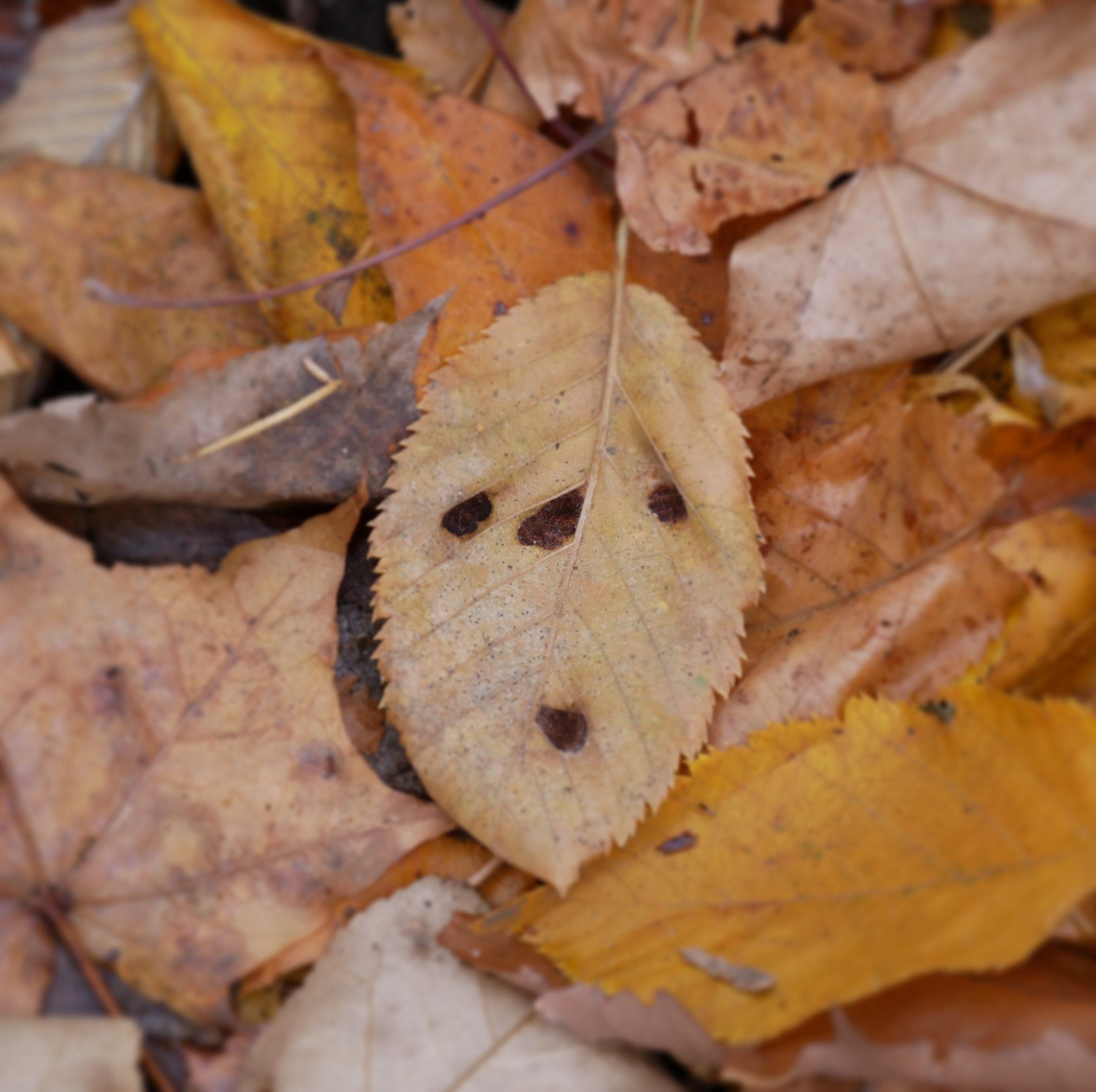 leaf-face