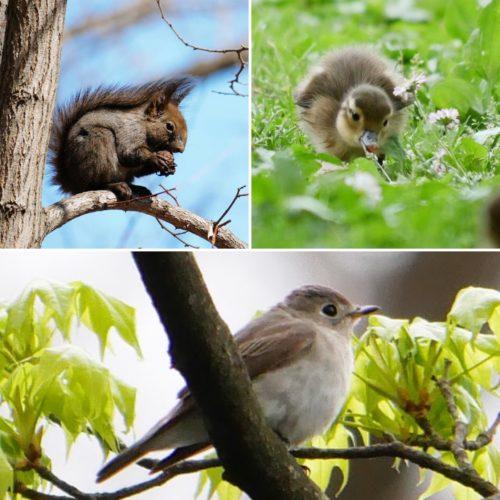 円山公園の動物たち
