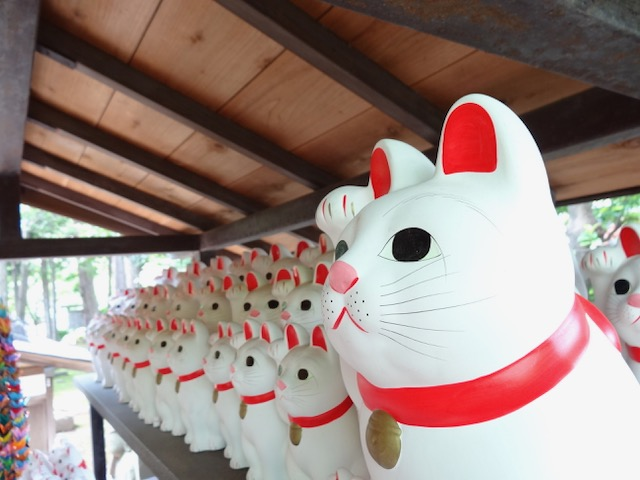 豪徳寺のまねき猫